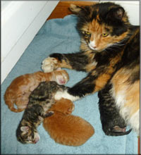 baby kittens with mother cat